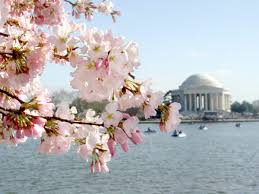 travel with val cherry blossoms events springing up in washington dc