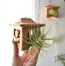Air Plants Rainforest Flora Sharing The World Of Tillandsia Air Plants And