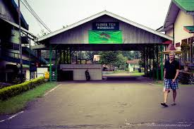 Teh Rolas Wonosari pabrik teh wonosari tea factory rolas agung w flickr