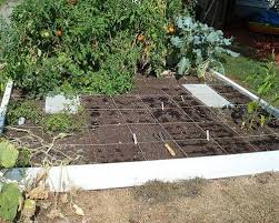 Types Of Vegetables To Grow In A Garden - fall vegetable garden vegetables to grow during fall mnn