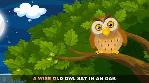 owls lessons tes teach