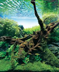 aquascaping layouts with stone and driftwood a layout with a combination of driftwood and stones details