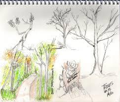 creative explorer sketching trees