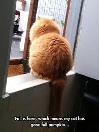 Cat Memes Tumblr - funny cat memes tumblr 100 images hilarious cat memes tumblr