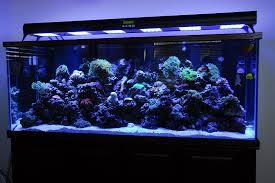 Moon Light Fixture Aquarium Led Lighting Moonlight Roselawnlutheran