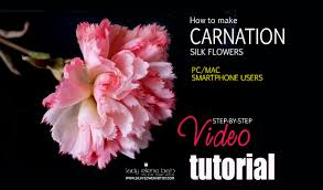 video carnation aurelia