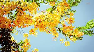 yellow flower wallpaper hd 3447 wallpaper download hd wallpaper