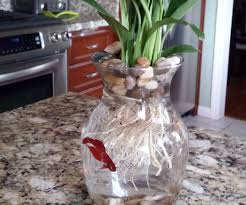 8 betta fish u0026 flower vase 4 steps