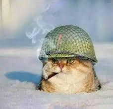 I Can Haz Meme Generator - war cat blank meme template cats pinterest meme template meme