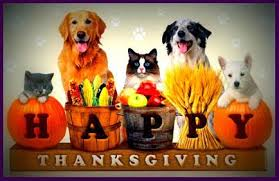 thanksgiving safety for pets gentle touch animal hospital