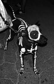 Halloween Costume Ideas Dogs 135 Halloween Dogs Images Animals