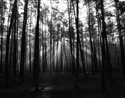 wallpaper tumblr forest black and white background tumblr download free cool hd