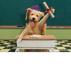 dog graduation cap graduating dog
