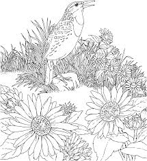 free printable flower coloring pages bird and flower state