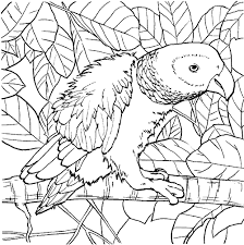 parrot coloring pages color plate coloring sheet printable