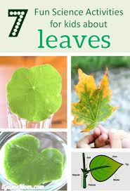 7 fun science activities for kids about leaves leaf structure