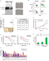 identification of selective inhibitors of cancer stem cells by