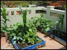 terrace gardening terrace gardening growing vegetables in containers