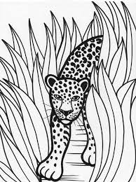 free coloring page of the rainforest leopard rainforest predator coloring page download print online