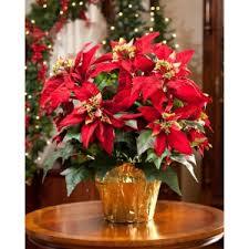 christmas plants christmas plants mission viejo ca florist sami s flowers