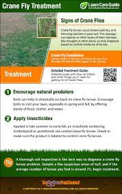 how to get rid of crane flies crane fly control u0026 treatment