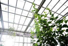 Outdoor Grow Lights The Problem With Using Grow Lights In Greenhouses Home Guides