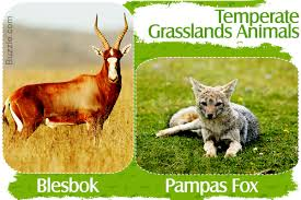 native plants and animals grassland biome animals and plants inhabiting this natural wonder