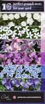 10 easy care plants for best 25 ground cover plants ideas on pinterest ground cover
