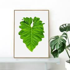 large heart shaped tropica taro leaf canvas art print poster
