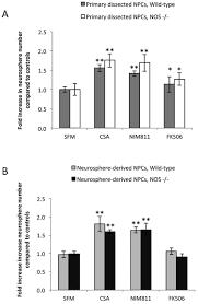cyclosporin a enhances neural precursor cell survival in mice