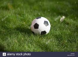 soccer ball lying in green grass at backyard of house stock photo