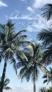 best 25 palm tree iphone wallpaper ideas on