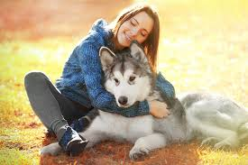 husky dogs brown haired smile girls sitting animals