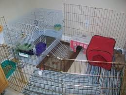 Diy Indoor Rabbit Hutch Indoor Cages Bunnies At Home