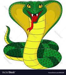 king cobra royalty free vector image vectorstock