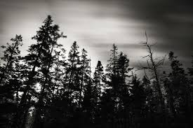 nate photography black and white pine tree state of mind