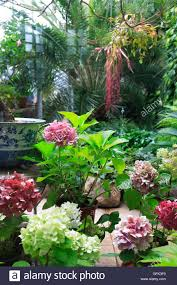 various tropical plants and flowers inside big winter garden stock