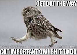 Owl Memes - 15 hilarious owl memes i can has cheezburger