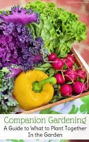 free companion plant guide for 24 backyard vegetable plants