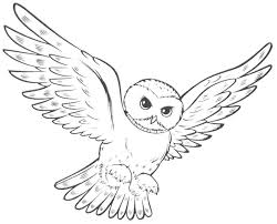 Cool Owl Coloring Pages Bestappsforkids Com Owl Color Pages
