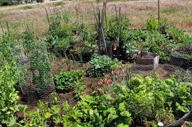 my first garden photos 7 different community garden plot designs