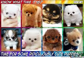 Cute Puppies Meme - ridiculously cute puppies by shadowgun meme center