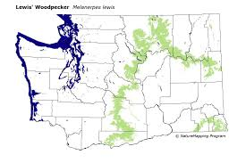 Zip Code Map Washington by Distribution Map Lewis U0027 Woodpecker Melanerpes Lewis