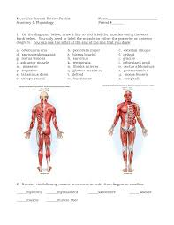 muscle archives page 31 of 36 human anatomy chart