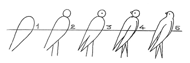 how to draw a bird step by step 10 great ways drawings of