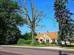 Landscaping Evansville In american tree experts u0026 landscaping in evansville in yellowbot