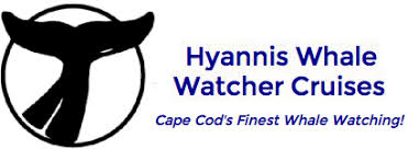Whale Watches Cape Cod - welcome to whale watching cape cod