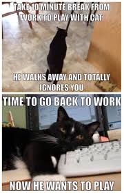 Mere Cat Meme - 507 best funny cats images on pinterest funny animals funny