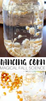 magical corn thanksgiving science experiment