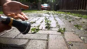 Envirobond Polymeric Sand by How To Remove Weeds From Interlocking Without A Pressure Washer